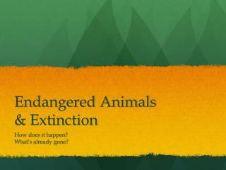 Endangered Animals  & Extinction