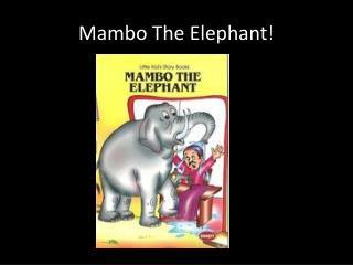 Mambo The Elephant!