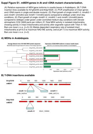 Suppl  Figure S1.  mMDH  genes in At and t-DNA mutant characterization.