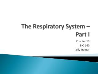 The  Respiratory System –  Part I