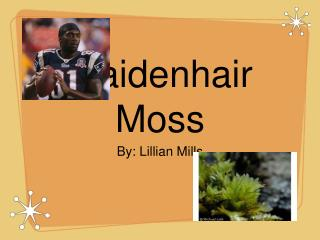 Maidenhair Moss