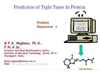 Prediction of Tight Turns In Protein