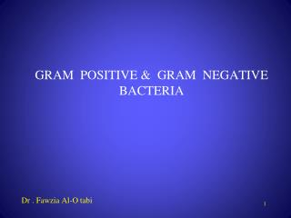 GRAM  POSITIVE &  GRAM  NEGATIVE BACTERIA