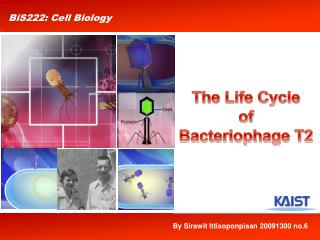 The Life Cycle  of  Bacteriophage T2