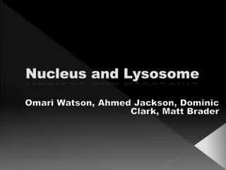 Nucleus and Lysosome