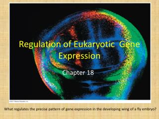 Regulation of Eukaryotic  Gene Expression
