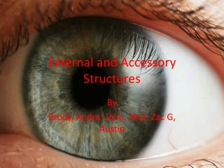 External and Accessory Structures