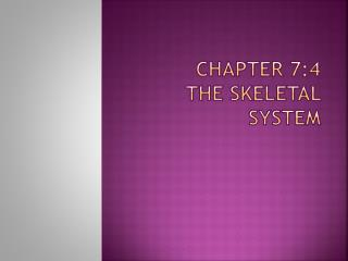 Chapter 7:4 The skeletal system