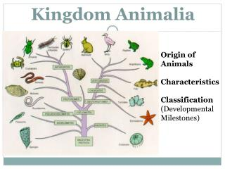 Image of: Peta Konsep Kingdom Animalia Slideserve Ppt Introduction To Kingdom Animalia Powerpoint Presentation Id