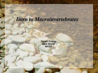 Intro to  Macroinvertebrates
