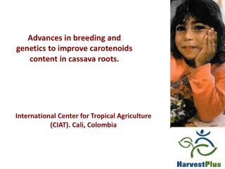 Advances in breeding and genetics to improve carotenoids content in cassava roots.
