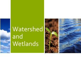 Watershed and Wetlands