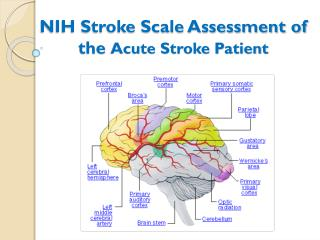 NIH Stroke Scale Assessment of the  Acute Stroke Patient