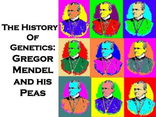 The History Of Genetics:   Gregor  Mendel and his Peas