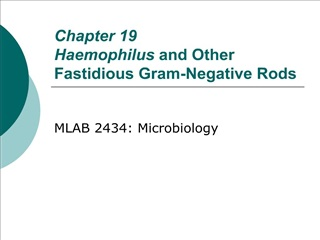Chapter 19 Haemophilus and Other Fastidious Gram-Negative Rods
