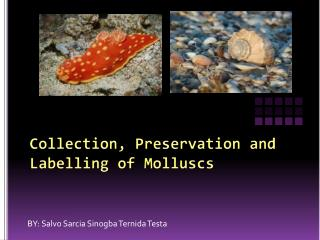 Collection, Preservation and Labelling of Molluscs