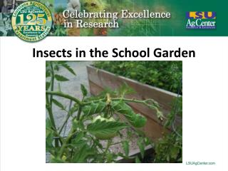 Insects in the School Garden