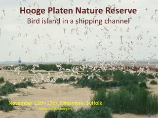 Hooge Platen Nature Reserve  Bird  island  in a  shipping channel