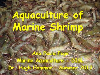 Aquaculture of  Marine Shrimp