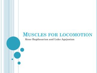 Muscles for locomotion