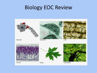 Biology EOC Review