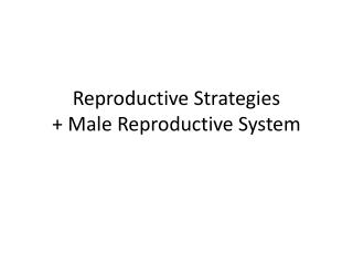 Reproductive Strategies + Male  Reproductive System