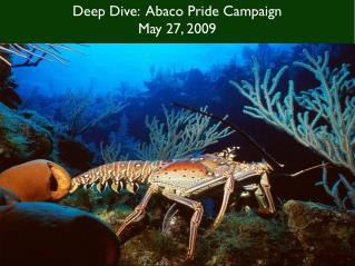 Deep Dive:  Abaco Pride Campaign May 27, 2009