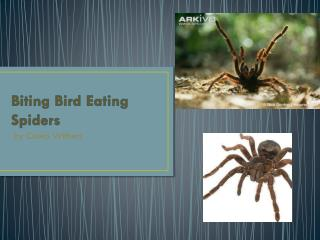 Biting Bird Eating Spiders