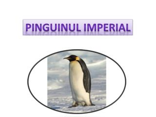 Pinguinul  imperial