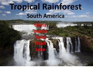 Tropical Rainforest South America