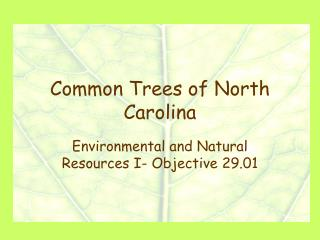 Common Trees of North Carolina