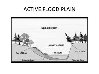ACTIVE FLOOD PLAIN
