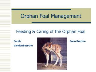 Orphan Foal Management