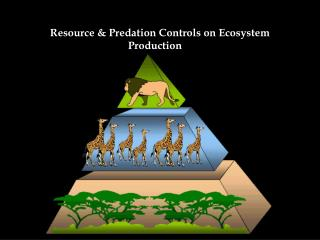 Resource & Predation Controls on Ecosystem Production
