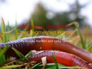 Amazing Annelids Super Segmented Worms!!