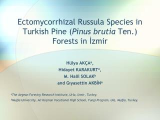 Ectomycorrhizal Russula Species  in  Turkish Pine  ( Pinus brutia  Ten.)  Forests  in İzmir