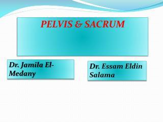 PELVIS & SACRUM