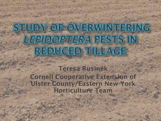 study of Overwintering  Lepidoptera  Pests in Reduced Tillage