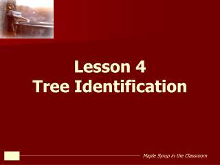 Lesson 4 Tree Identification
