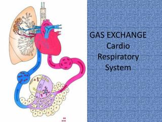 GAS EXCHANGE Cardio Respiratory System