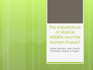 The Importance of Marine Wildlife and the Human  I mpact