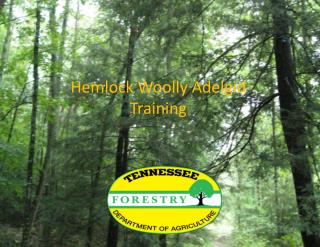 Hemlock Woolly Adelgid  Training