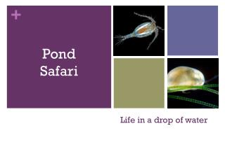 Life in a drop of water