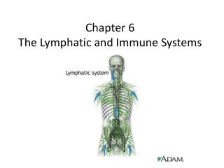 Chapter 6 The Lymphatic and Immune Systems