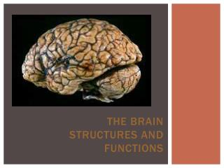 The Brain Structures and Functions