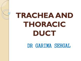 TRACHEA AND THORACIC DUCT