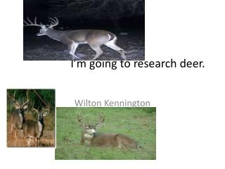 I'm going to research deer.