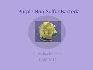 Purple Non-Sulfur Bacteria