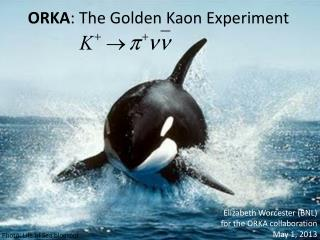 ORKA : The Golden  Kaon  Experiment