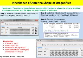 Inheritance of Antenna Shape of Dragonflies